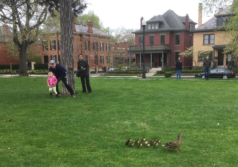 Chasing ducklings in Schiller Park.