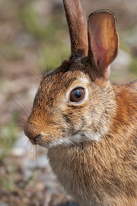 Eye of the Hare