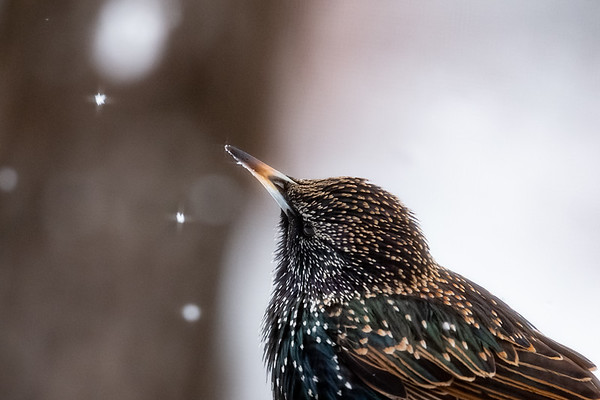 Snowfall from Heaven