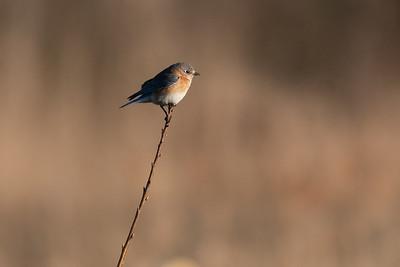 On a Twig
