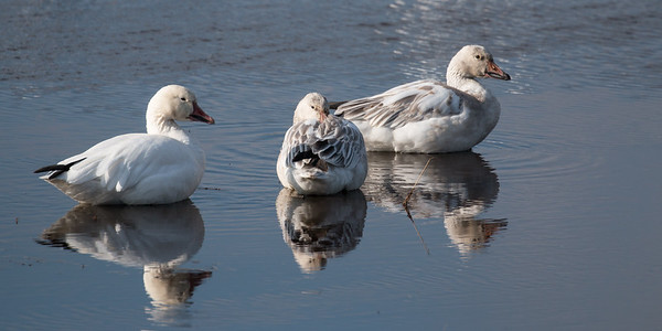 Three on a Pond
