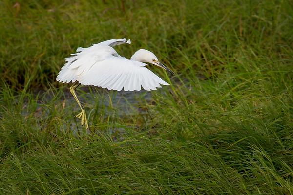 Grassy Landing