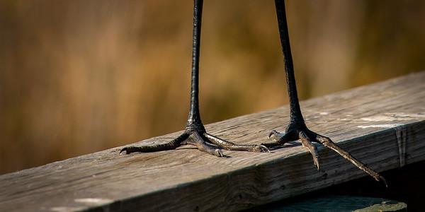 Egret Feet