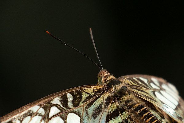 Butterfly Portrait