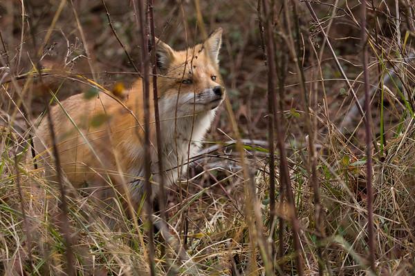 Hunting the Grasslands