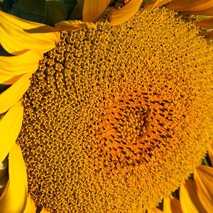Circular Summer