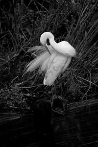 Egret Bride