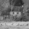 Goose Hideaway