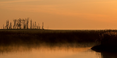 Marsh Morning