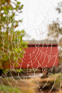 The Web at Loy's Station