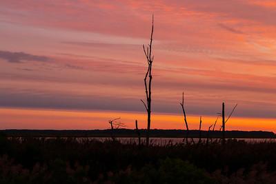 Pink Marsh Morning