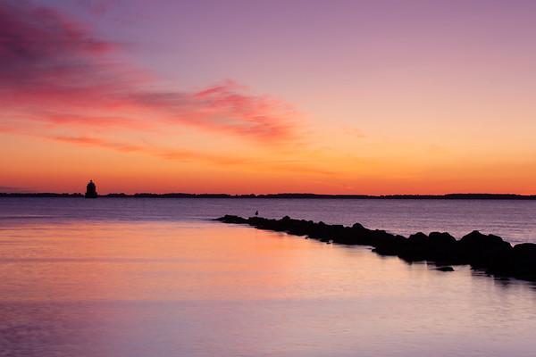 Seagull and the Sunrise