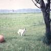 Animal Neighbors (19)