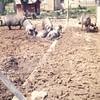 Animal Neighbors (30)