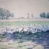 Animal Neighbors_1970_05 (2)