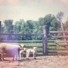 Animal Neighbors_1970_05