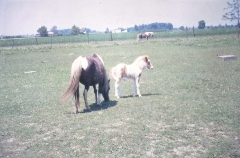 Animal Neighbors (18)
