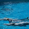 Swimming tith dolphins