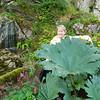 Ireland 2011 with big plant