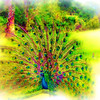 airbrush-4-06-sfzoo-DSC02518