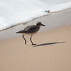 shorebird-crystal-cove-20