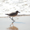 shorebird-crystal-cove-08