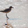 shorebird-crystal-cove-12