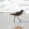 shorebird-crystal-cove-13