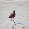 shorebird-crystal-cove-16