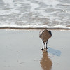 shorebird-crystal-cove-01