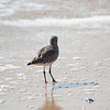 shorebird-crystal-cove-15