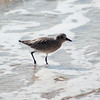 shorebird-crystal-cove-10