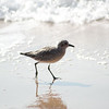 shorebird-crystal-cove-07