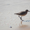 shorebird-crystal-cove-17