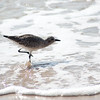 shorebird-crystal-cove-09