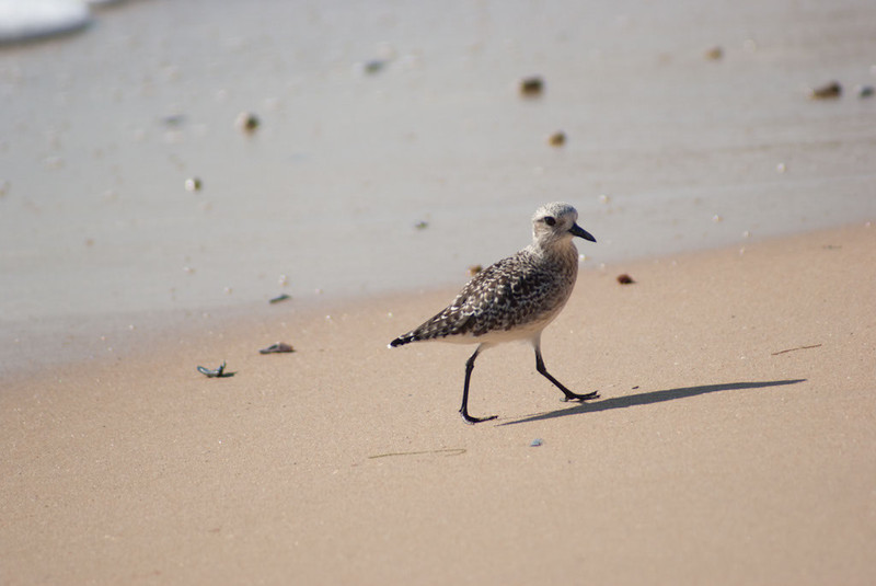 shorebird-crystal-cove-24