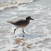 shorebird-crystal-cove-11
