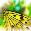 airbrush-paperkite-bfly-stlz-DSC09370