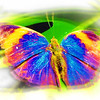 airbrush-indian-leaf-bfly-stlz-DSC09336