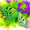 airbrush-paperkite-bflyh-DSC00035