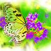 airbrush-paperkite-bflyh-DSC00063