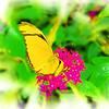 airbrush-orange-julia-bflyh-DSC09670
