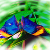 airbrush-indian-leaf-bflyh-DSC09843