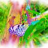 airbrush-paperkite-bflyh-DSC09860