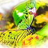 airbrush-paperkite-bfly-stlz-DSC09290