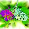 airbrush-paperkite-bflyh-DSC00034