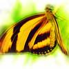 airbrush-orange-tiger-bflyh-DSC09983