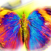 airbrush-indian-leaf-bfly-stlz-DSC09337