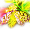 airbrush-paperkite-bfly-stlz-DSC09271