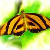 airbrush-orange-tiger-bflyh-DSC09979